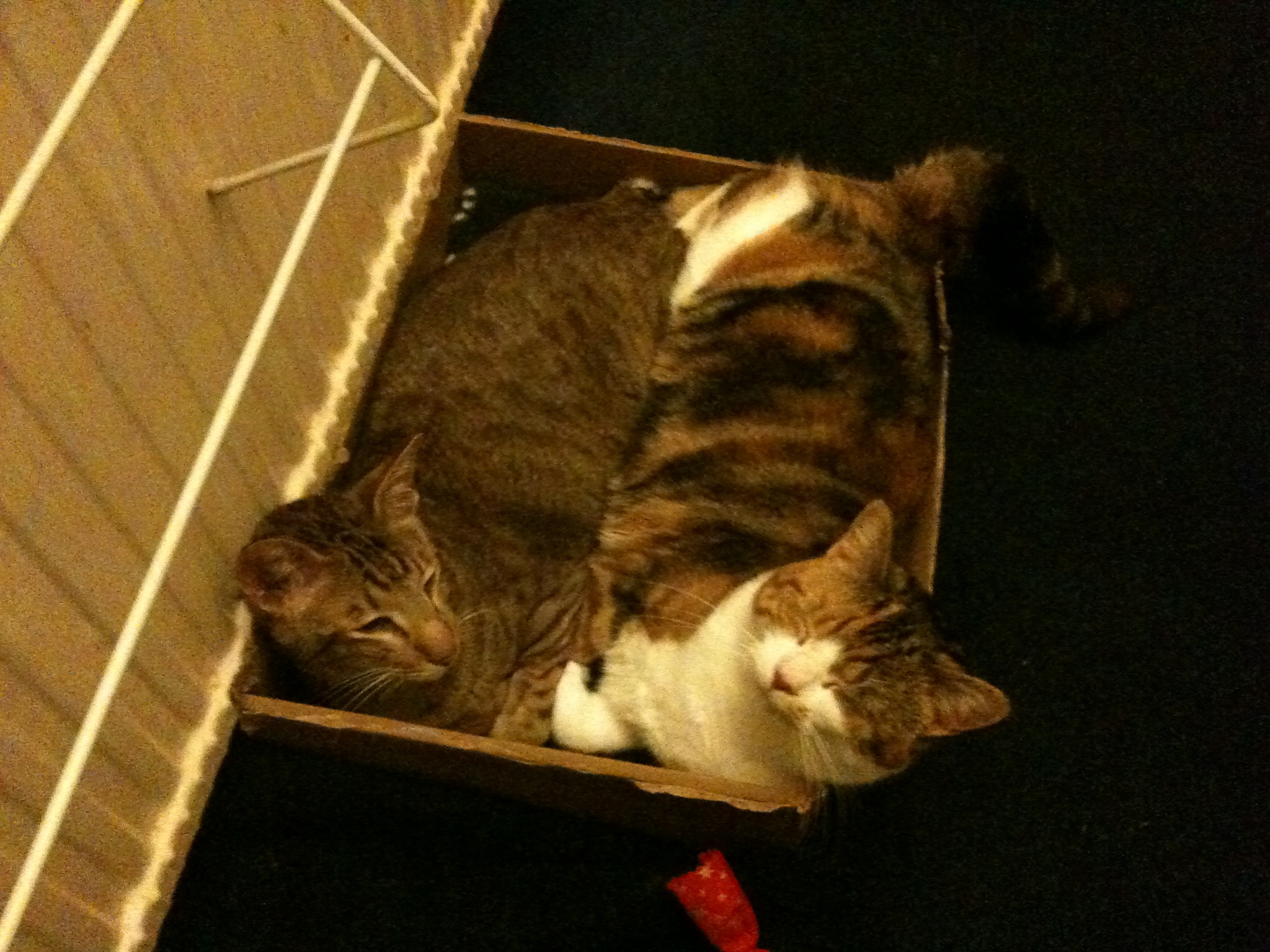 Wong! & Pip! in a box of warm!